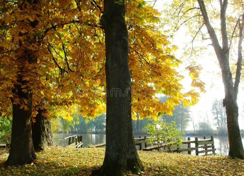 Árboles de castaña del otoño en la orilla fotografía de archivo libre de regalías