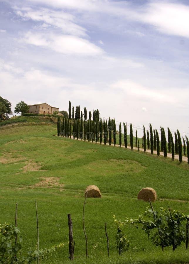 Árboles de ciprés toscanos imagenes de archivo
