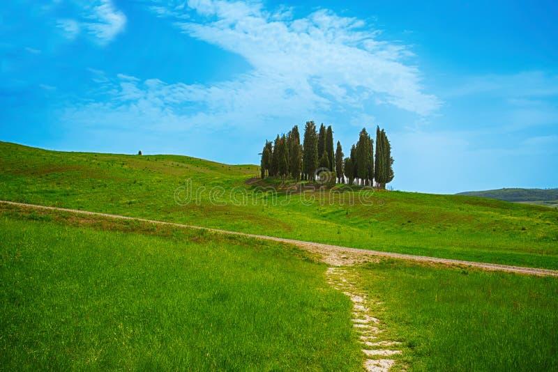 Árboles de cipreses en las colinas de Toscana, provincia de Siena, Italia imagen de archivo libre de regalías