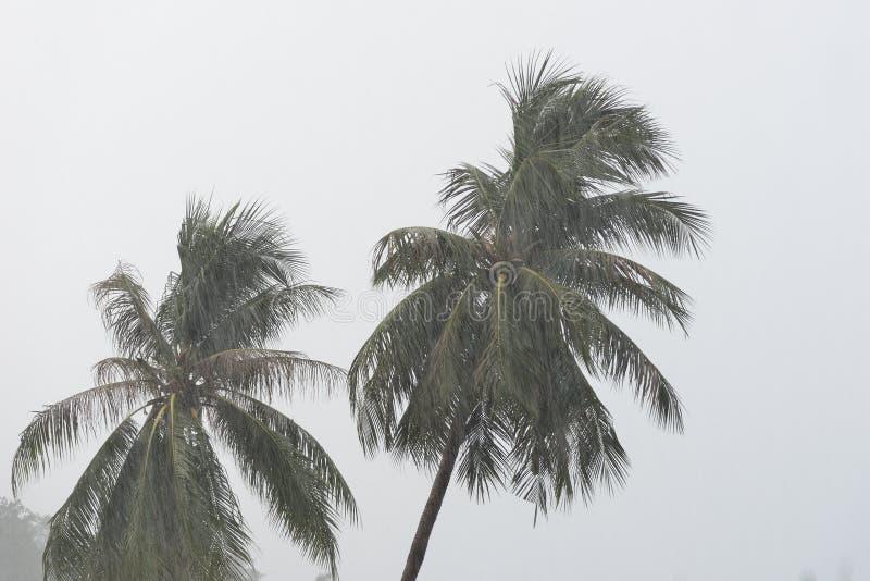 Árboles de coco debajo de la lluvia tropical contra el cielo gris imágenes de archivo libres de regalías