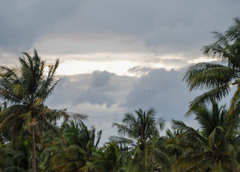 Árboles de coco durante una tormenta fotos de archivo