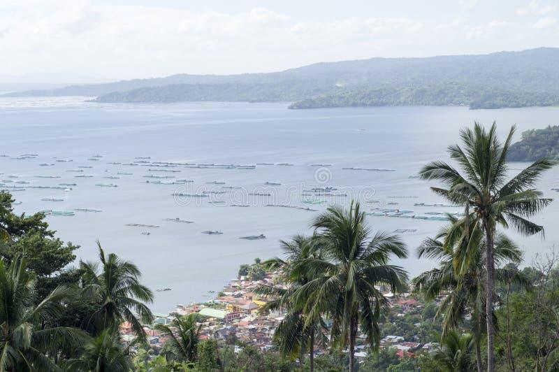 Árboles de coco en el lago y el volcán de desatención hilltop foto de archivo