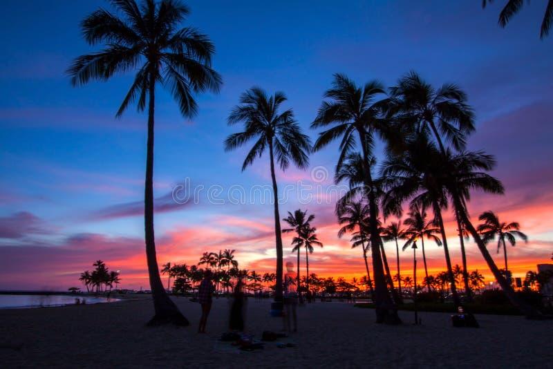 árboles de coco en la puesta del sol en Hawaii foto de archivo libre de regalías