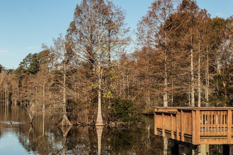 Árboles de Cypress calvo en el embarcadero de la pesca en el lago achaparrado fotos de archivo libres de regalías