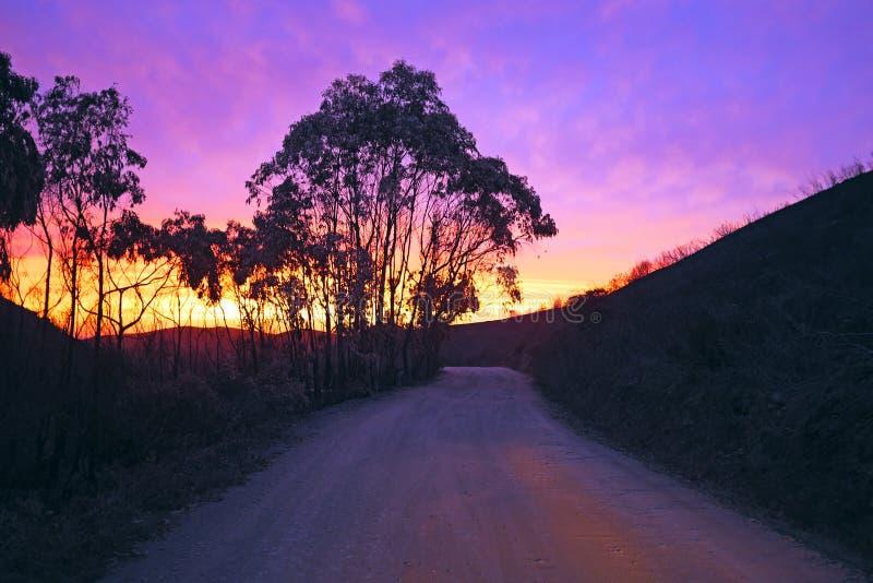 Árboles de eucalipto en un camino de tierra fotografía de archivo
