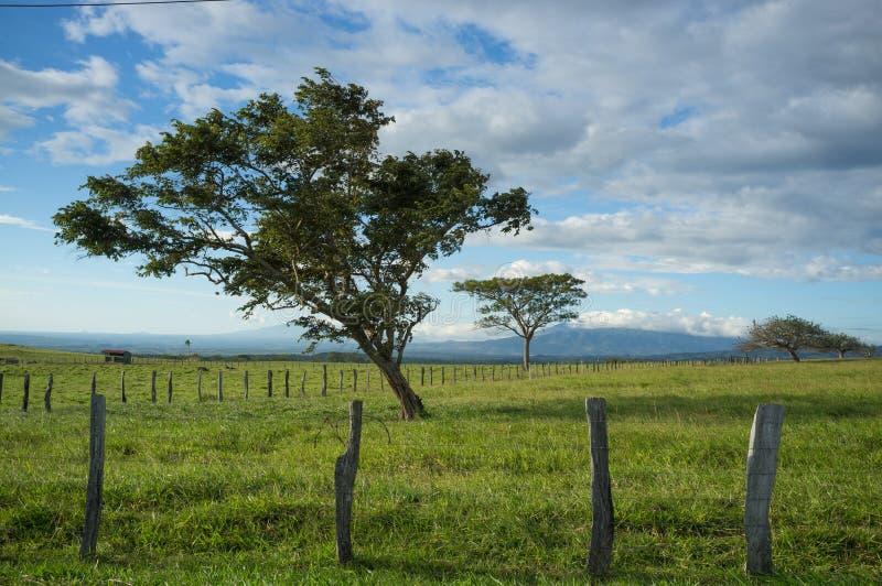 Árboles de Guanacaste imagen de archivo libre de regalías