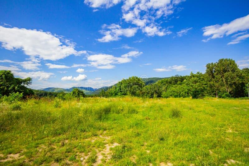 Árboles de hierba del jardín y cielo azul imagenes de archivo