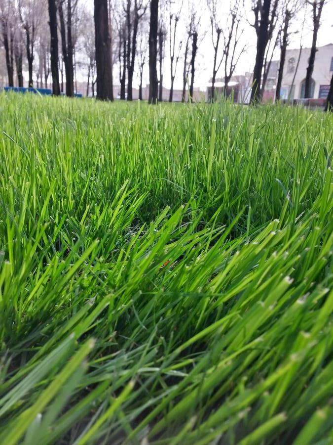Árboles de hierba hermosos de la naturaleza de la primavera foto de archivo libre de regalías