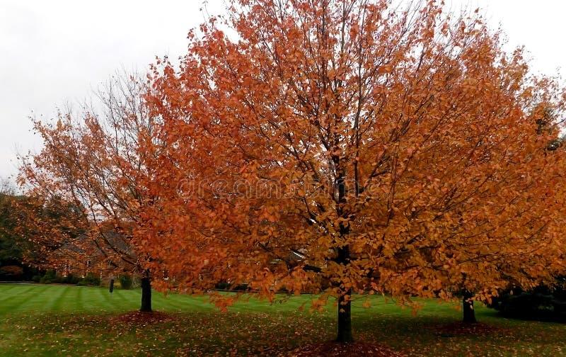 Árboles de hojas caducas en área residencial foto de archivo libre de regalías