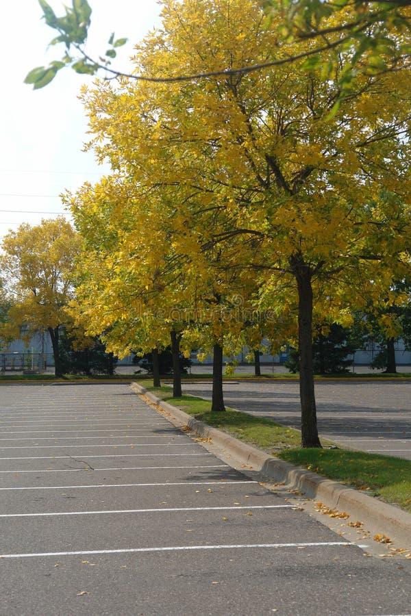Árboles de la caída en estacionamiento fotos de archivo