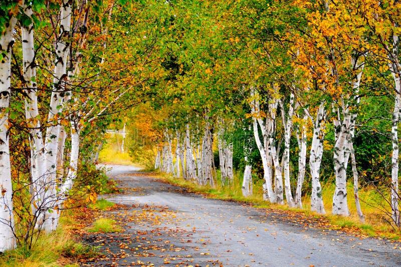 Árboles de la caída en la carretera nacional fotos de archivo libres de regalías