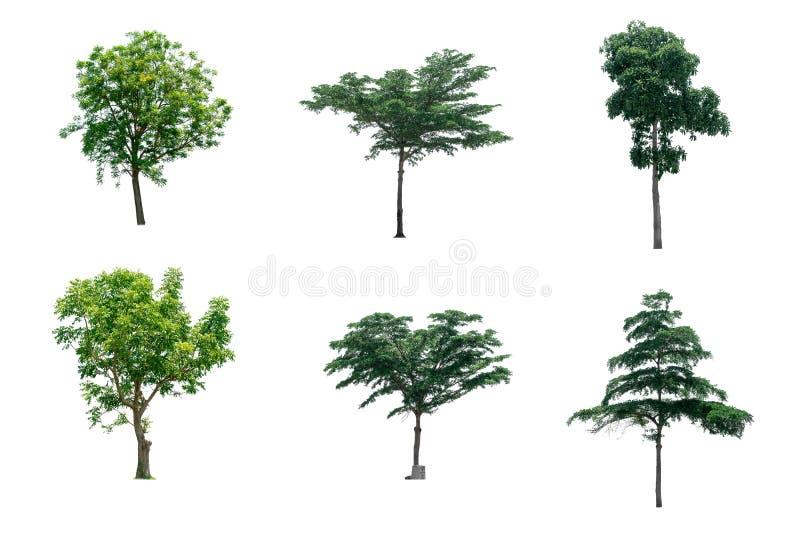 Árboles de la colección de aislado en el fondo blanco foto de archivo