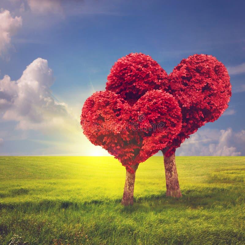Árboles de la forma del corazón Concepto del día de tarjeta del día de San Valentín imágenes de archivo libres de regalías