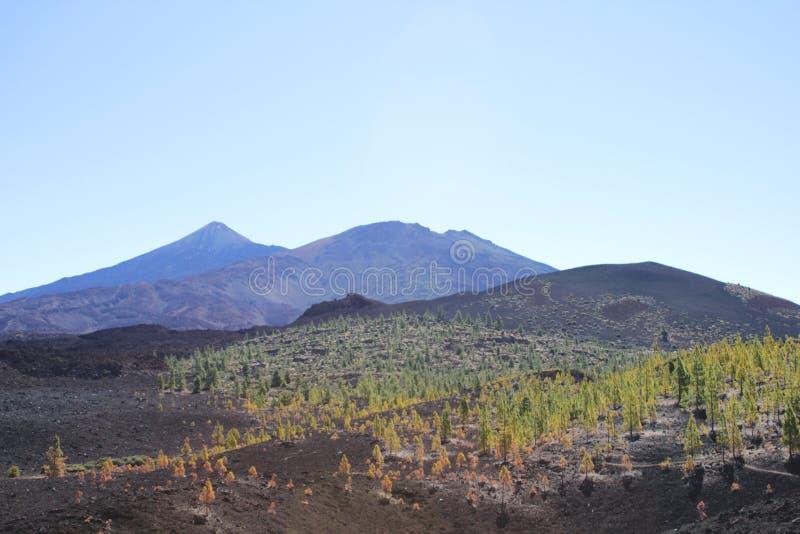 Árboles de la lava foto de archivo libre de regalías