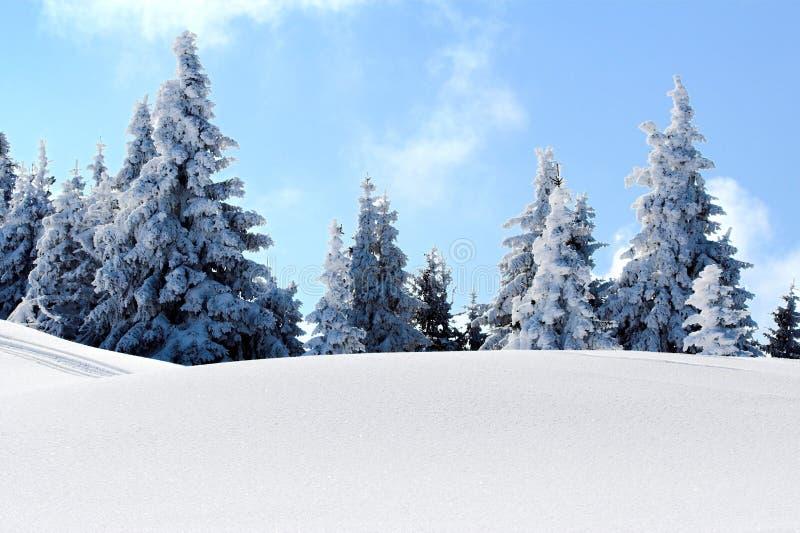 Árboles de la montaña de la nieve imágenes de archivo libres de regalías