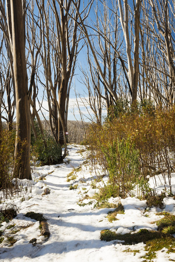 Árboles de la nieve imagen de archivo libre de regalías
