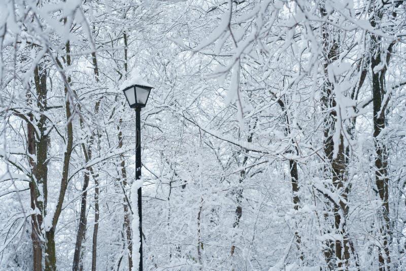 Árboles de la nieve fotos de archivo