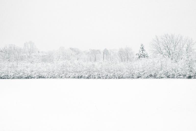 Árboles de la nieve del invierno, perspectiva del camino del parque, filas blancas del árbol del callejón fotos de archivo