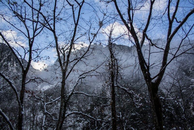 Árboles de la nieve en las montañas japonesas imagen de archivo libre de regalías