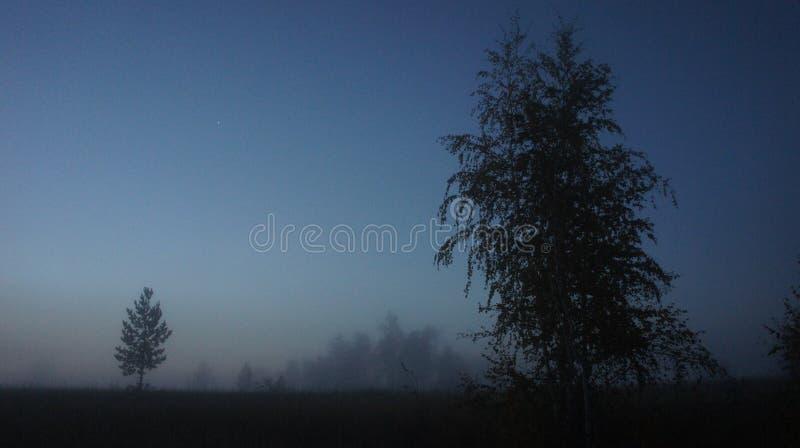 Árboles de la noche fotografía de archivo