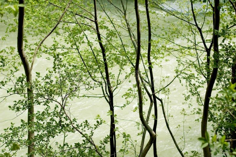 Árboles de la orilla fotos de archivo libres de regalías
