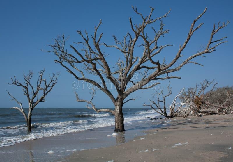 Árboles de la playa fotos de archivo