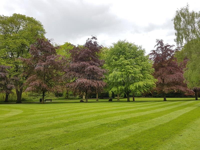 Árboles de la primavera fotografía de archivo libre de regalías