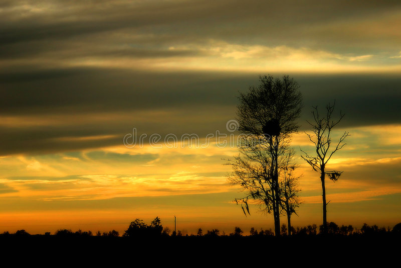 Árboles de la puesta del sol imagen de archivo