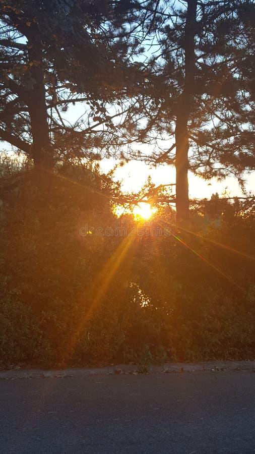 Árboles de la puesta del sol lightplay imagen de archivo
