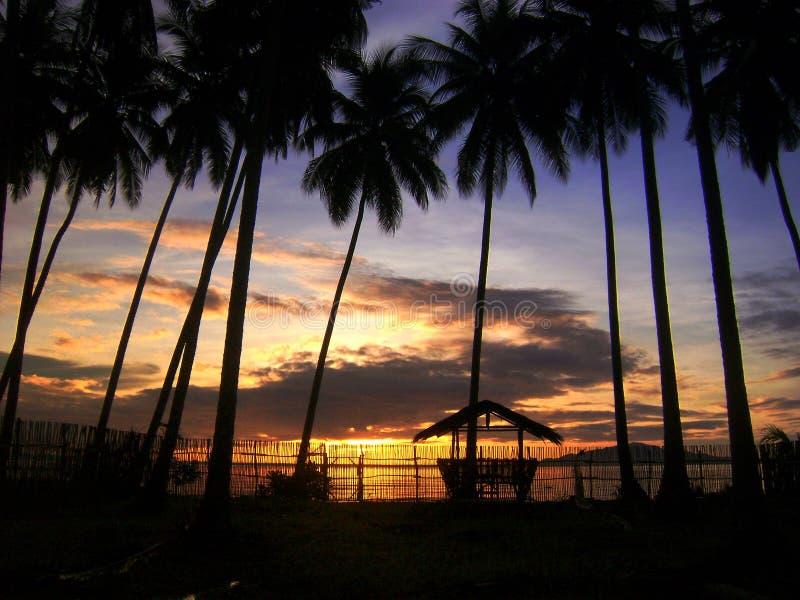 Árboles de la puesta del sol y de coco, Mati, Filipinas fotos de archivo libres de regalías