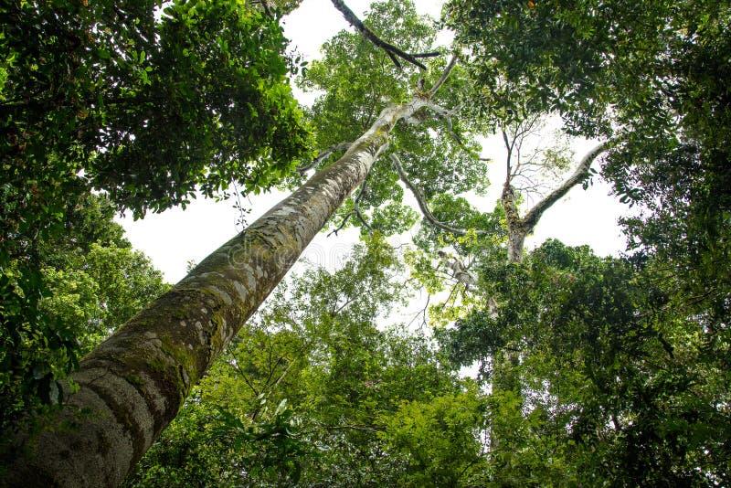 Árboles de la selva tropical en Manuel Antonio National Park imagenes de archivo