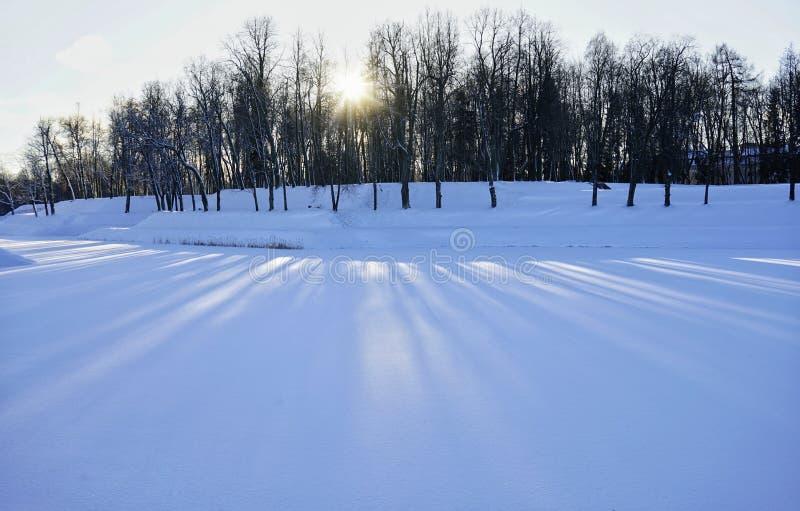 árboles de la sombra de la luz del sol del sol del jardín del parque de la nieve del invierno foto de archivo