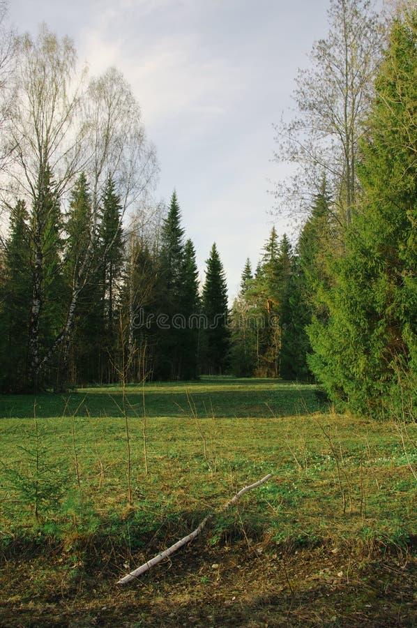 Árboles de la vegetación forestal del barranco del campo de la estación imagen de archivo libre de regalías