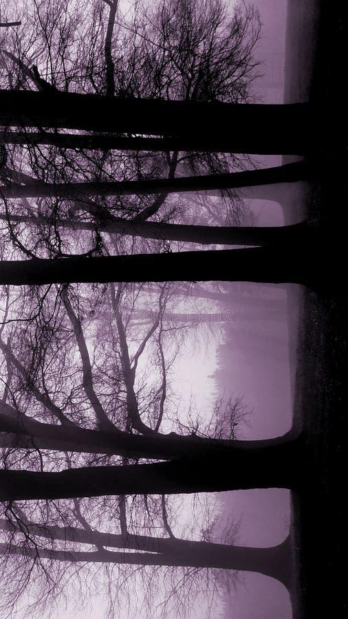 Árboles de Lavendar foto de archivo