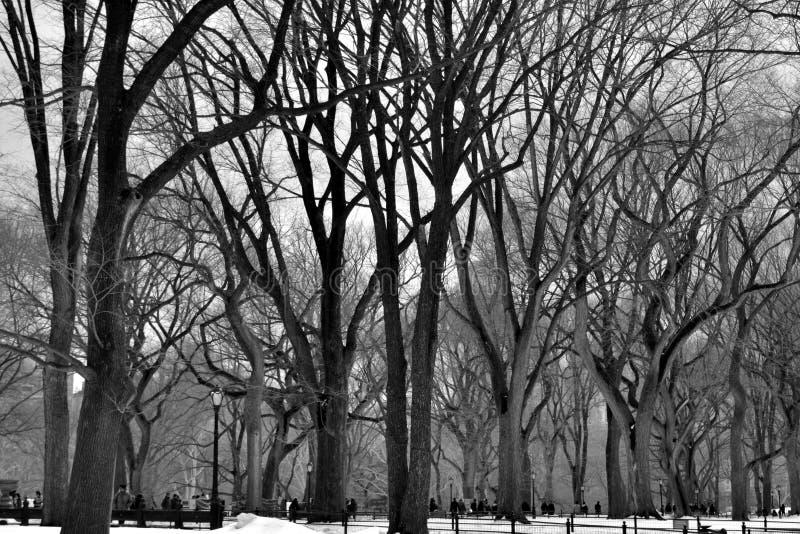 Árboles de Leavless en Central Park foto de archivo libre de regalías