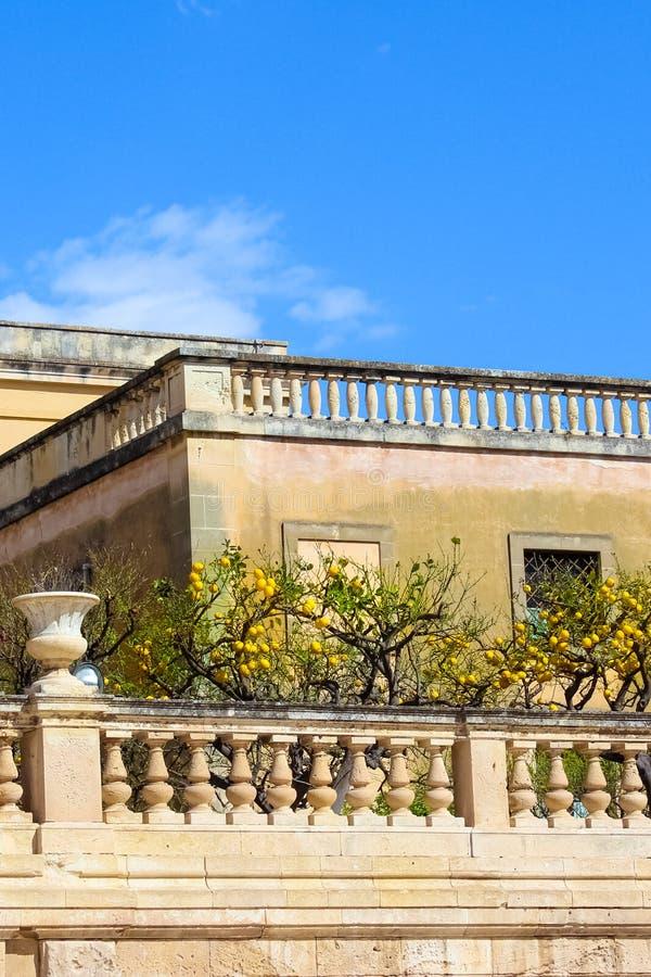 Árboles de limón con los limones maduros en terrazas históricas en el cuadrado de Piazza Duomo en Syracuse, Sicilia, Italia Se lo foto de archivo