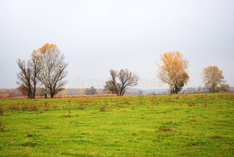 Árboles de los sauces y de álamos con las hojas amarillas en el prado cerca de las cañas secas, bosque en el horizonte, cielo llu fotos de archivo libres de regalías