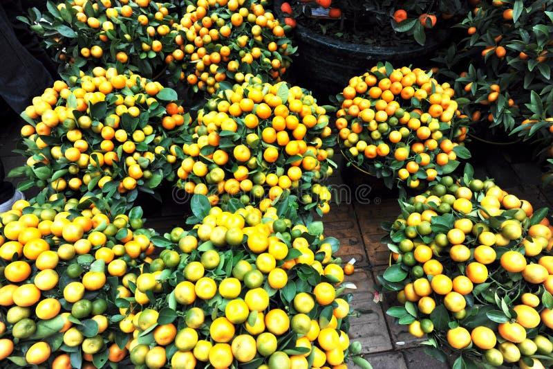 Árboles de mandarín imagen de archivo