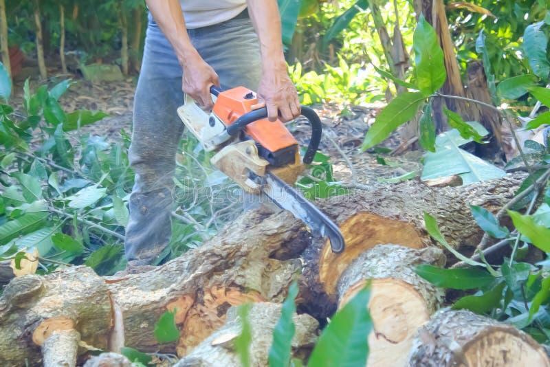 Árboles de mango del corte del hombre usando la motosierra eléctrica anaranjada fotos de archivo libres de regalías