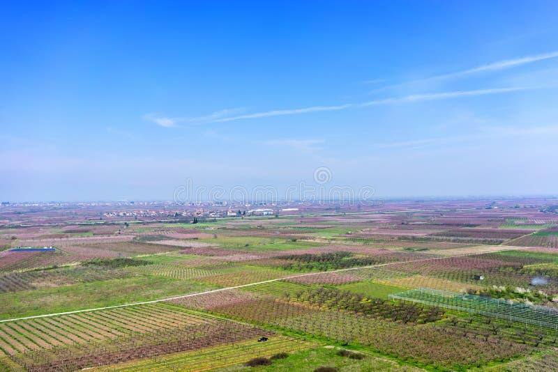 Árboles de melocotón florecientes de las fotografías aéreas en una huerta imágenes de archivo libres de regalías