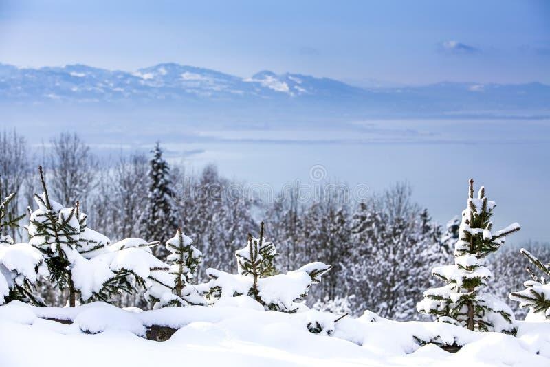 Árboles de navidad en la nieve en las montañas que pasan por alto el lago en invierno foto de archivo libre de regalías