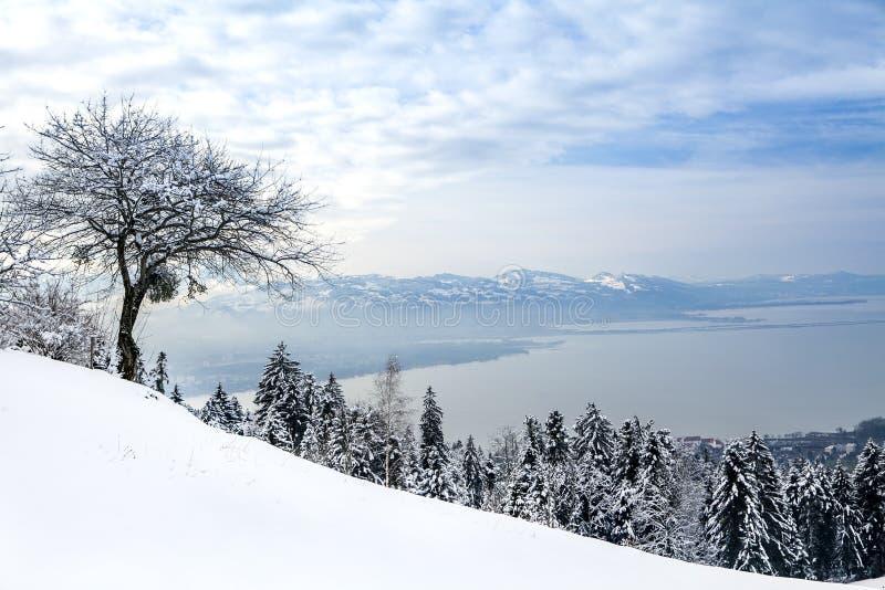 Árboles de navidad en la nieve en las montañas que pasan por alto el lago y un árbol en el primero plano en invierno en un día so imagen de archivo libre de regalías