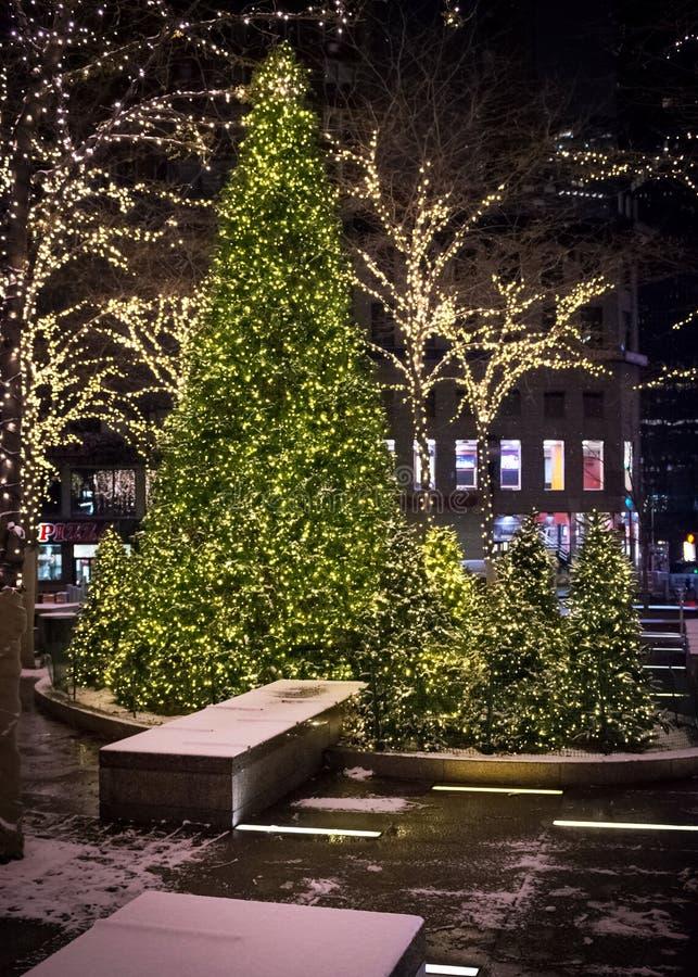 Árboles de navidad en la noche imagenes de archivo