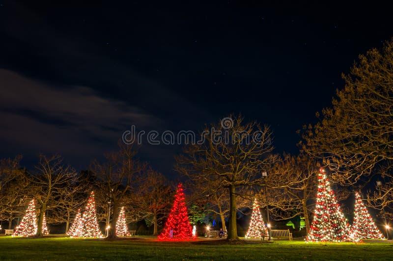 Árboles de navidad en la noche, jardines de Longwood, Pennsylvania. fotografía de archivo