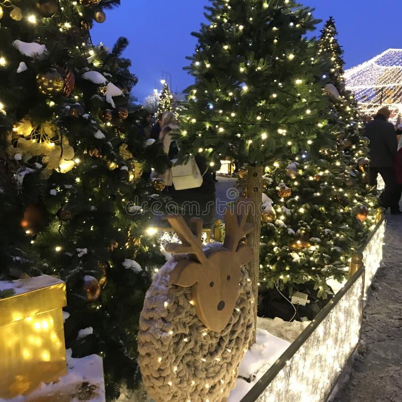 Árboles de navidad en parque fotografía de archivo