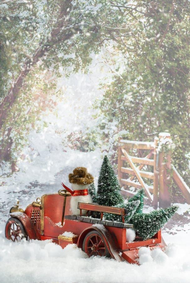 Árboles de navidad que llevan del camión fotografía de archivo libre de regalías