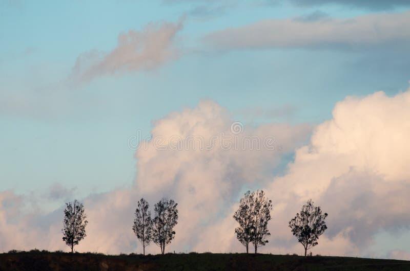 Árboles de nubes imagen de archivo libre de regalías
