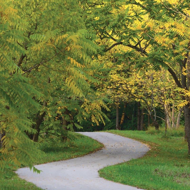 Árboles de nuez en el parque otoñal, Autumn Path Scene ajardinado vertical detallado grande, torciendo la calzada de la pista de  imágenes de archivo libres de regalías