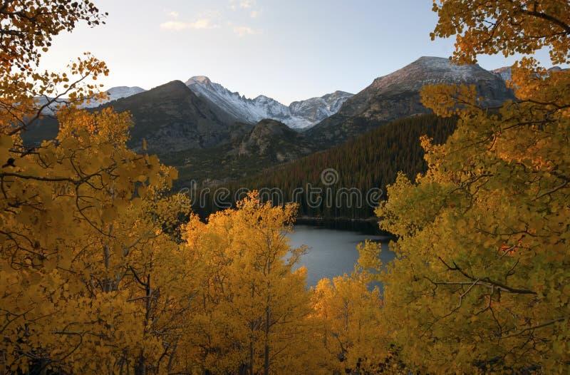 Árboles de oro de Aspen imagen de archivo
