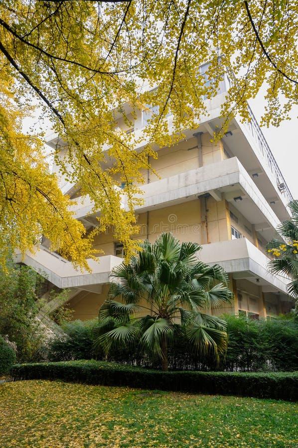 Árboles de oro delante del edificio imágenes de archivo libres de regalías